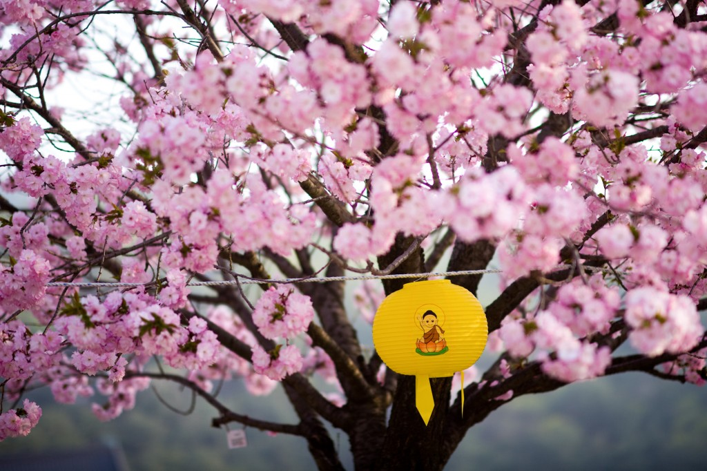 """Hello Spring"" by Neal Singleton. Taken in Gagweonsa, Cheonan."