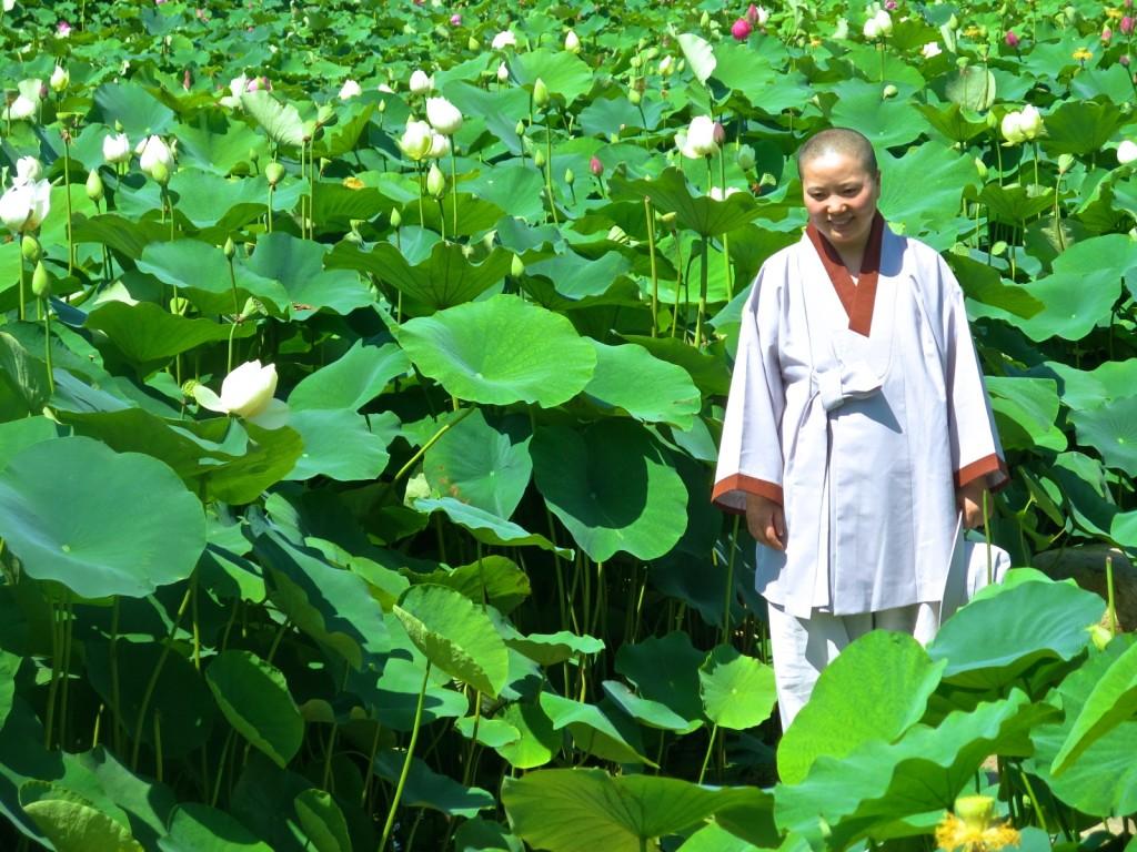 Lotus Flowers in Summer. Lyz Glickman. Gyeongju.