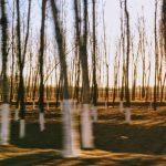4_ Bare Trees
