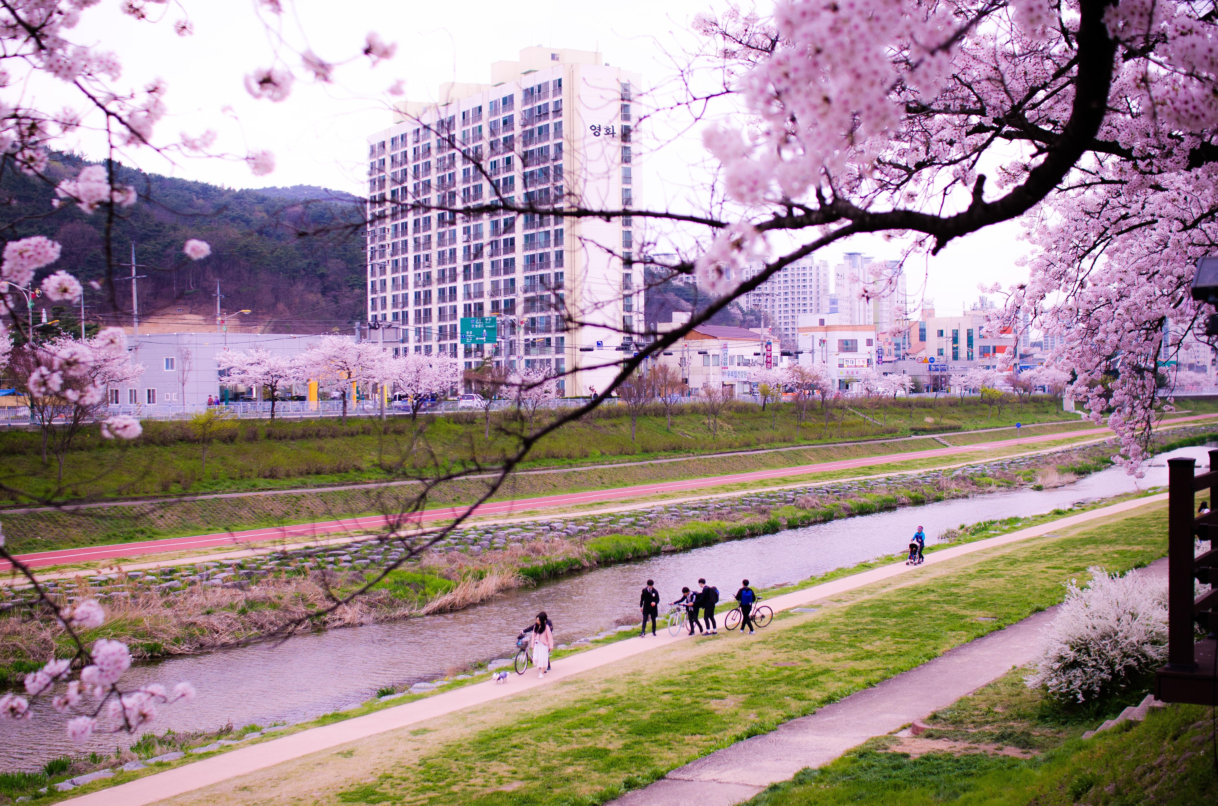 6- Blossoms
